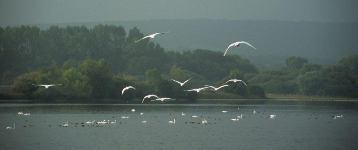 Birdwatching, bird, water, forest