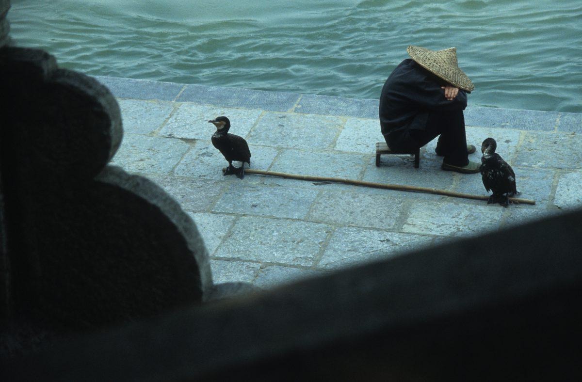 Fisherman, fish, relax, bird, water