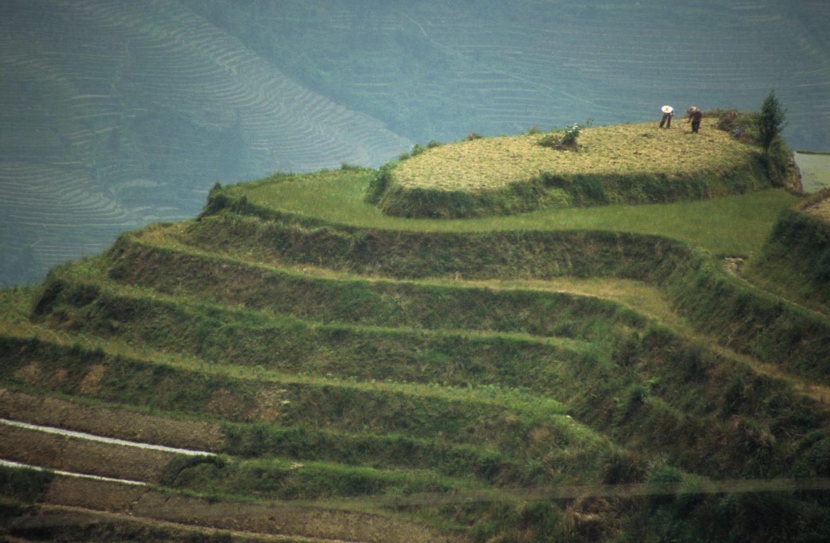 Rice terraces, mountain, work