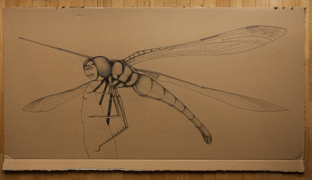 Dragonfly - 151x77cm markers on containerboard, ch3, cardboard