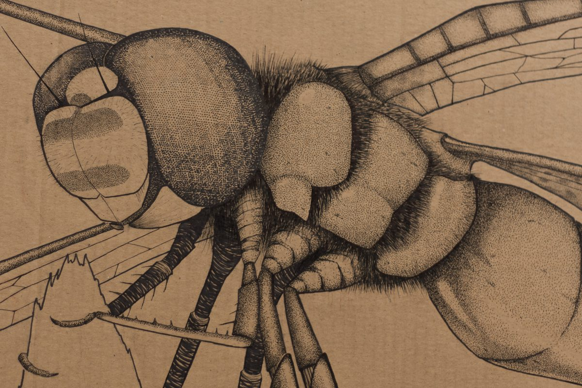 Dragonfly - 151x77cm markers on containerboard. Detail, ch3, cardboard