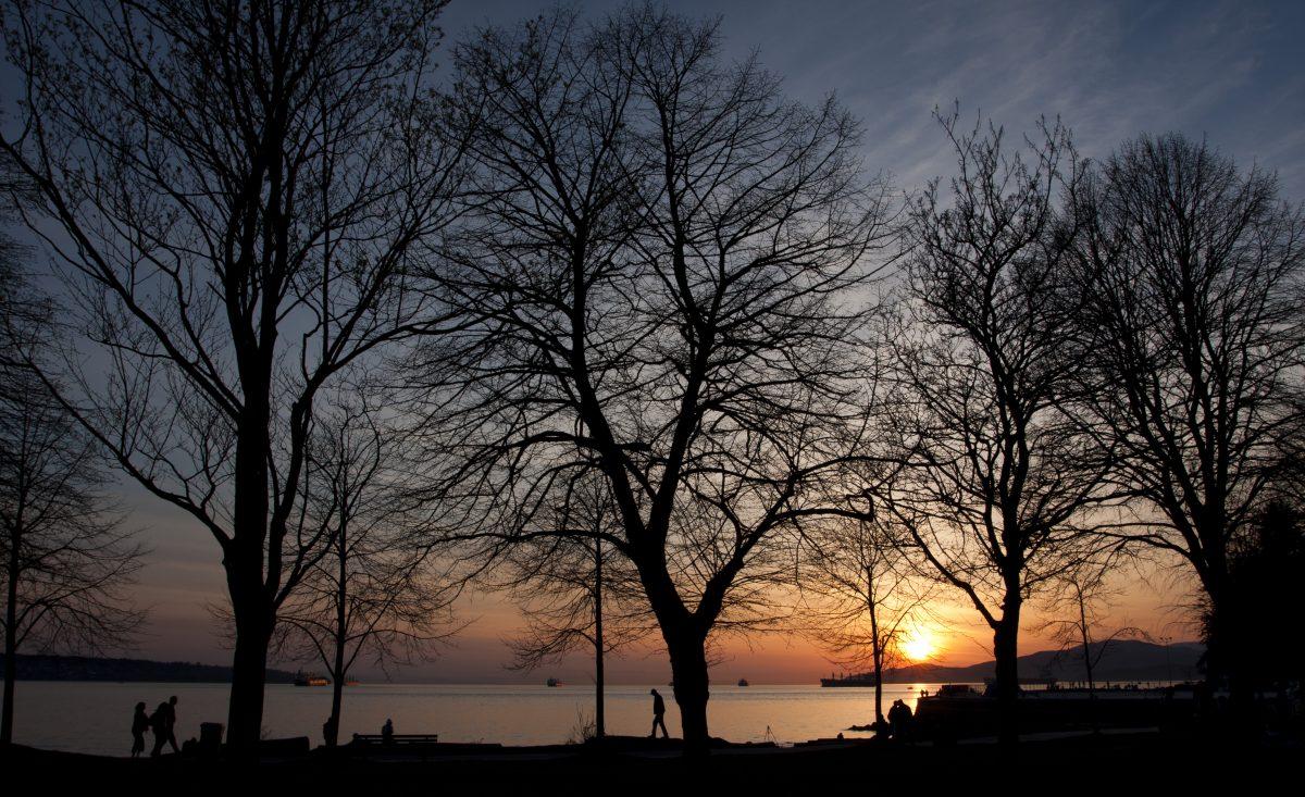 2nd beach, tree, sunset, sky