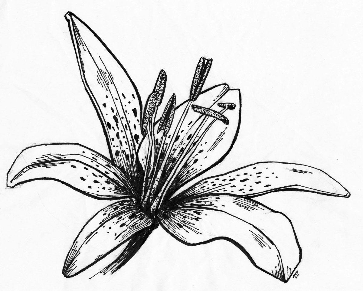 Flower - Pen on paper, 20x29cm, paper, illustration, ch3