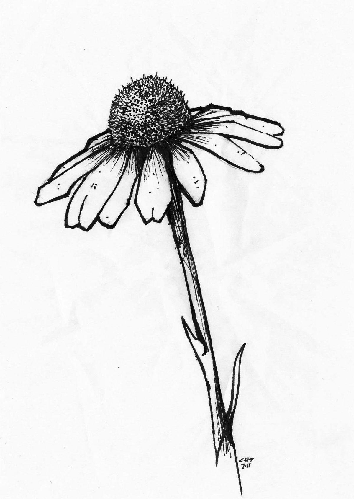 Flower - Pen on paper, 13x18cm, paper, illustration, ch3
