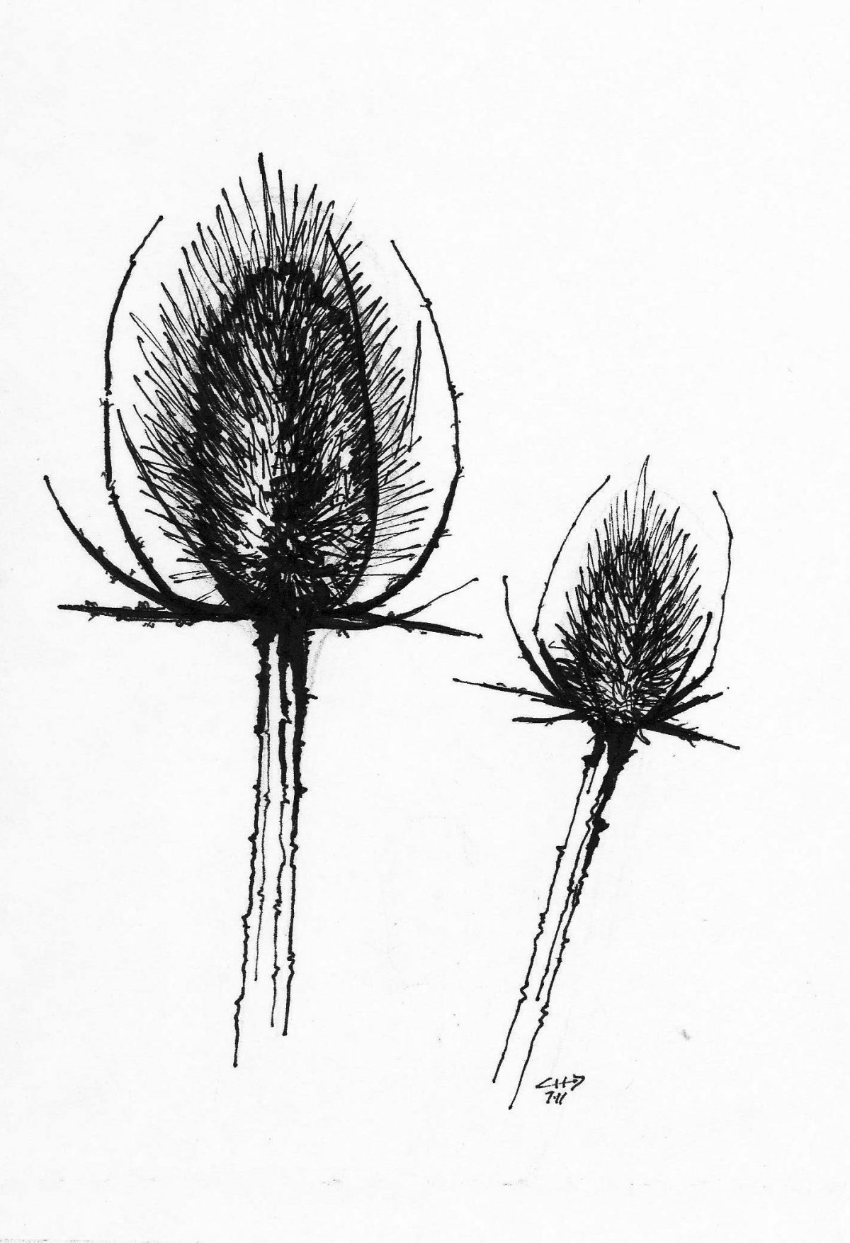 Flower - Pen on paper, paper, illustration, ch3