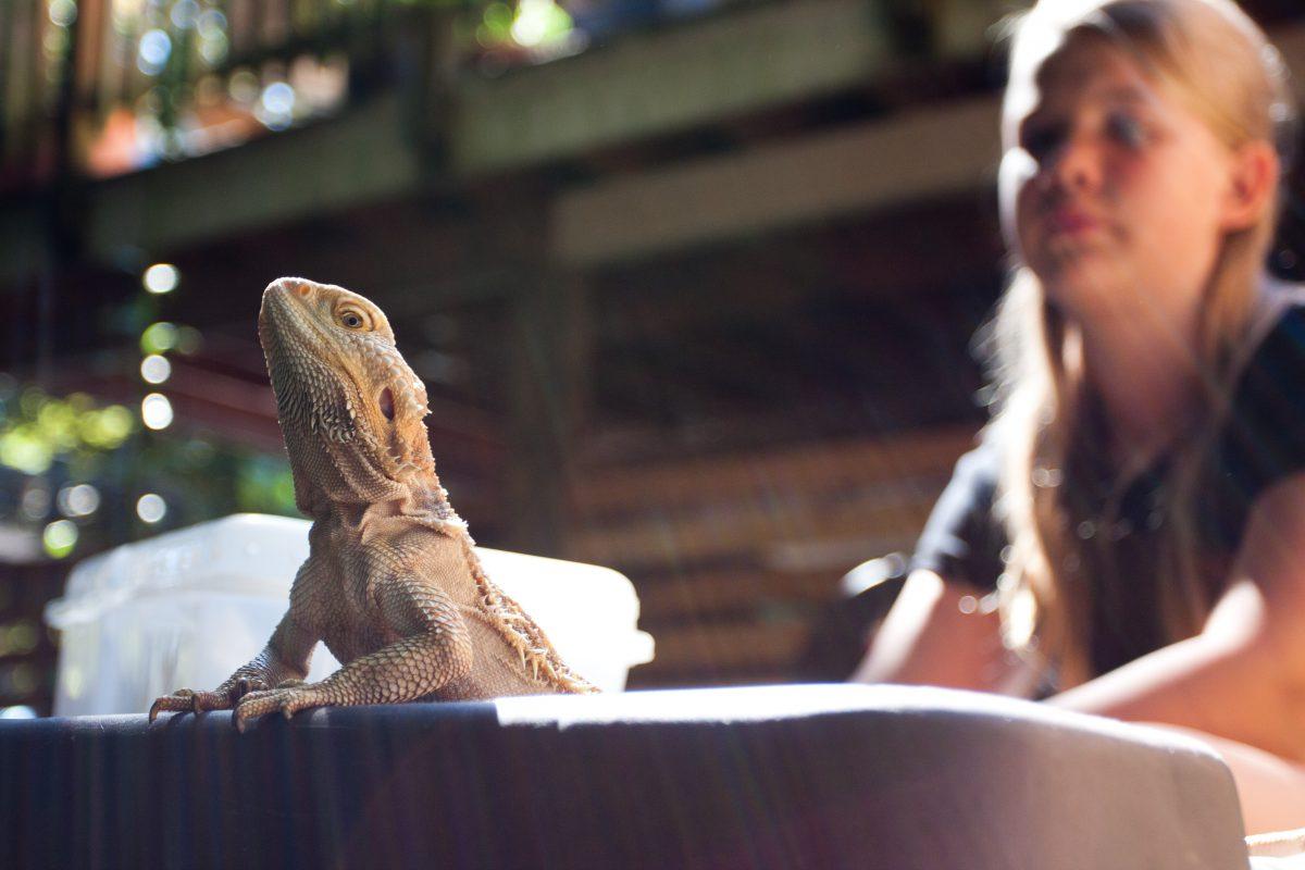 lizard, animal, female