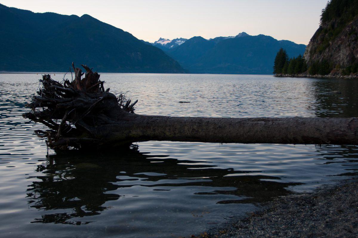 Fallen tree, water, sea, tree