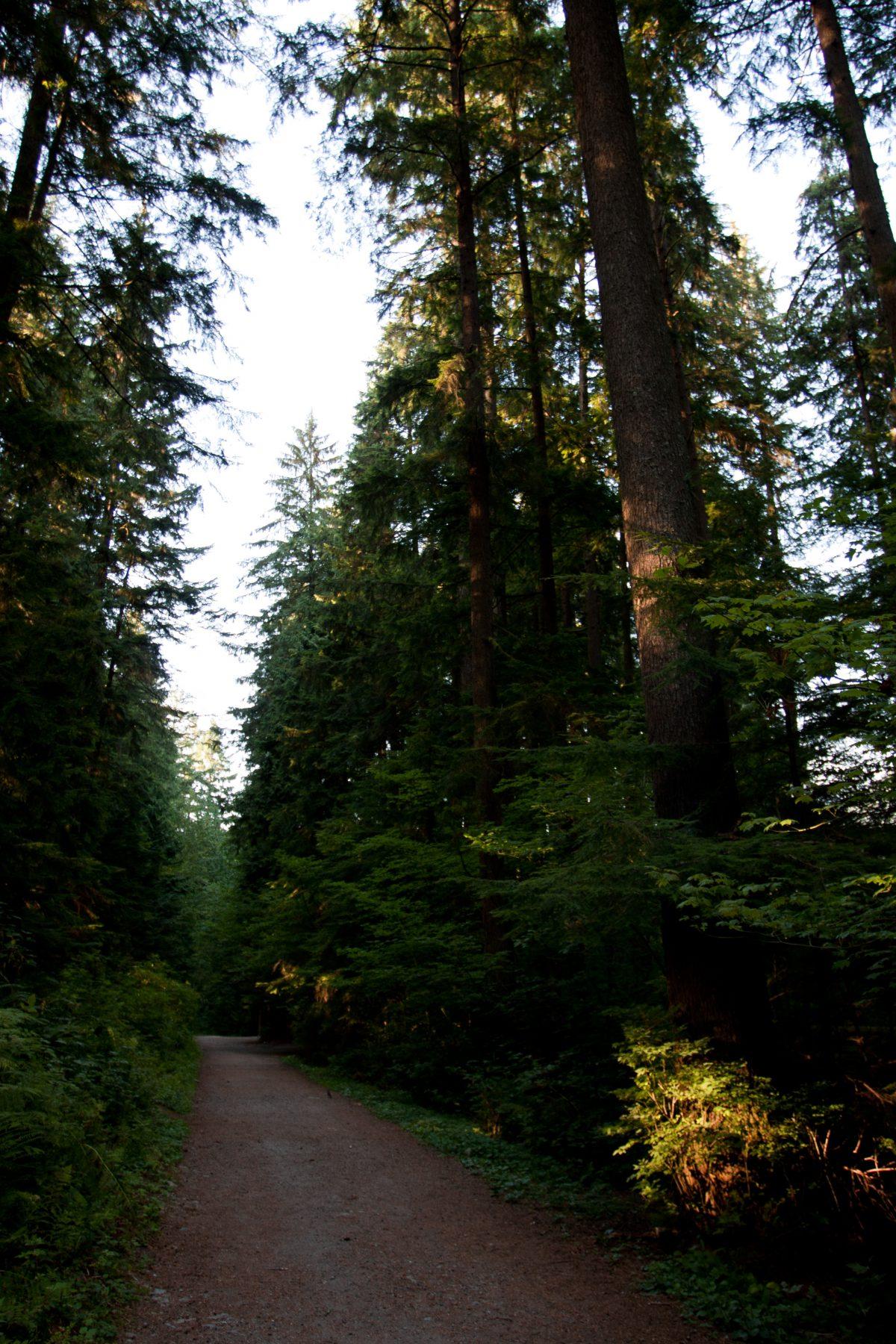 Kapilano, forest