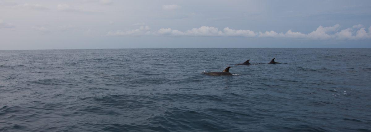 Dolphins - At Puerto Escondido, sea, dolphin, fish