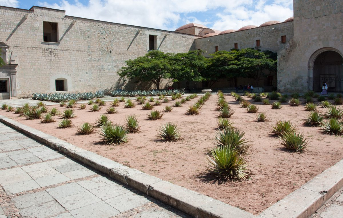 plant, garden, cactus