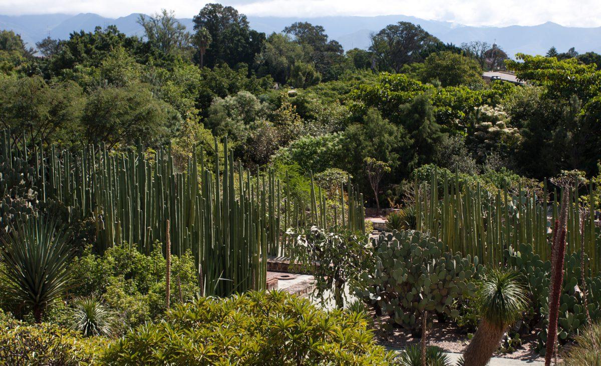 Botanic garden - by Santo Domingo, garden, plant, cactus