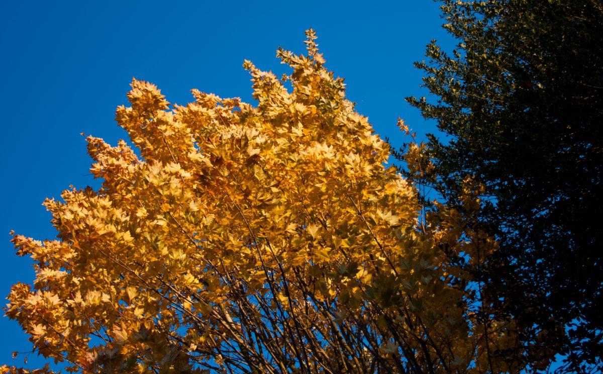 Autumn with clear sky, leaf, autumn, tree