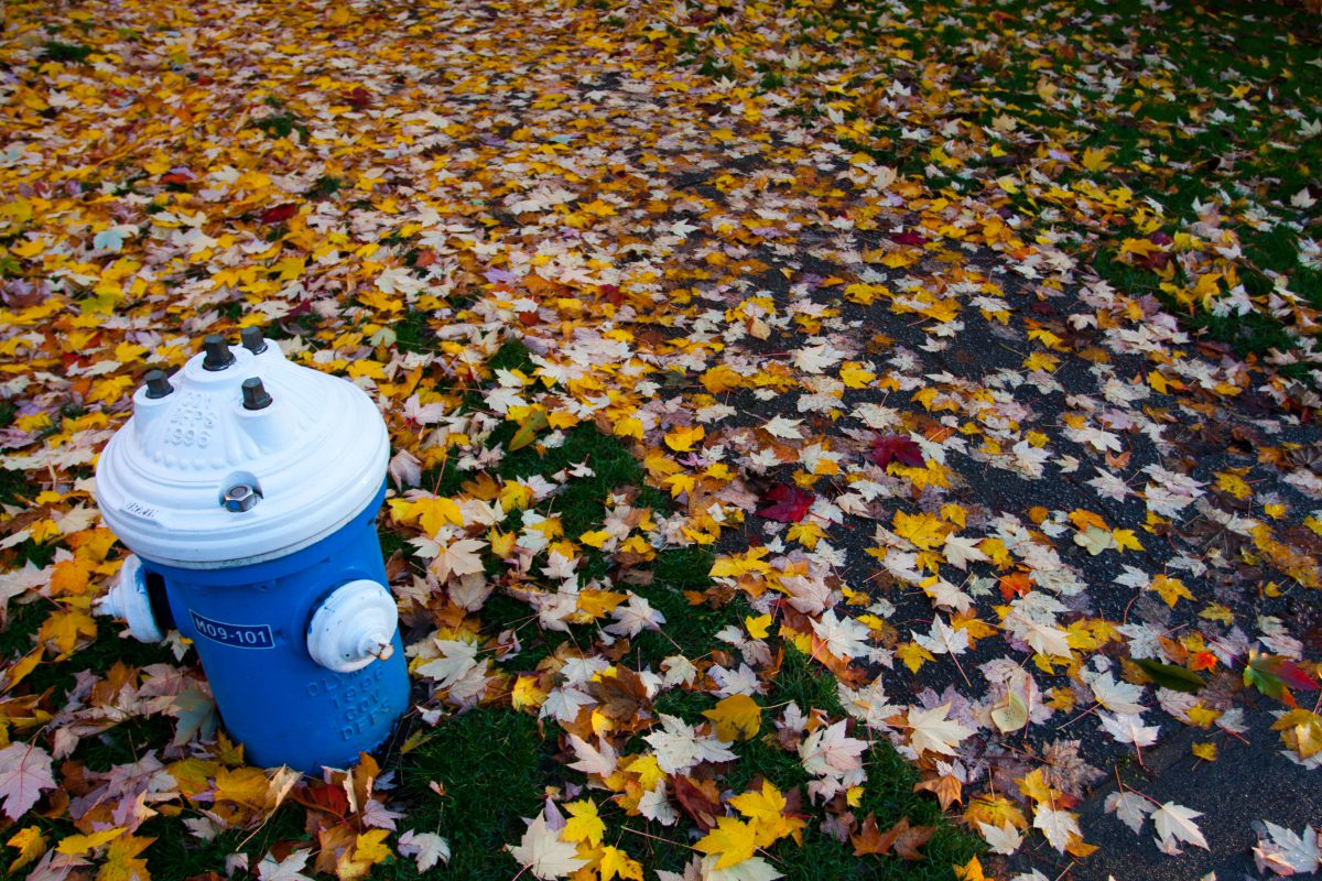 Hydrant, leaf, autumn, hydrant, color