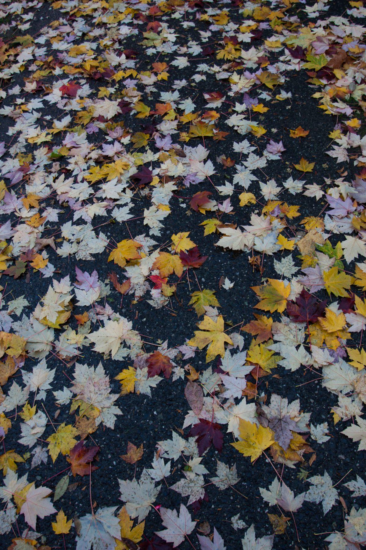 Leaf blanket, leaf, autumn