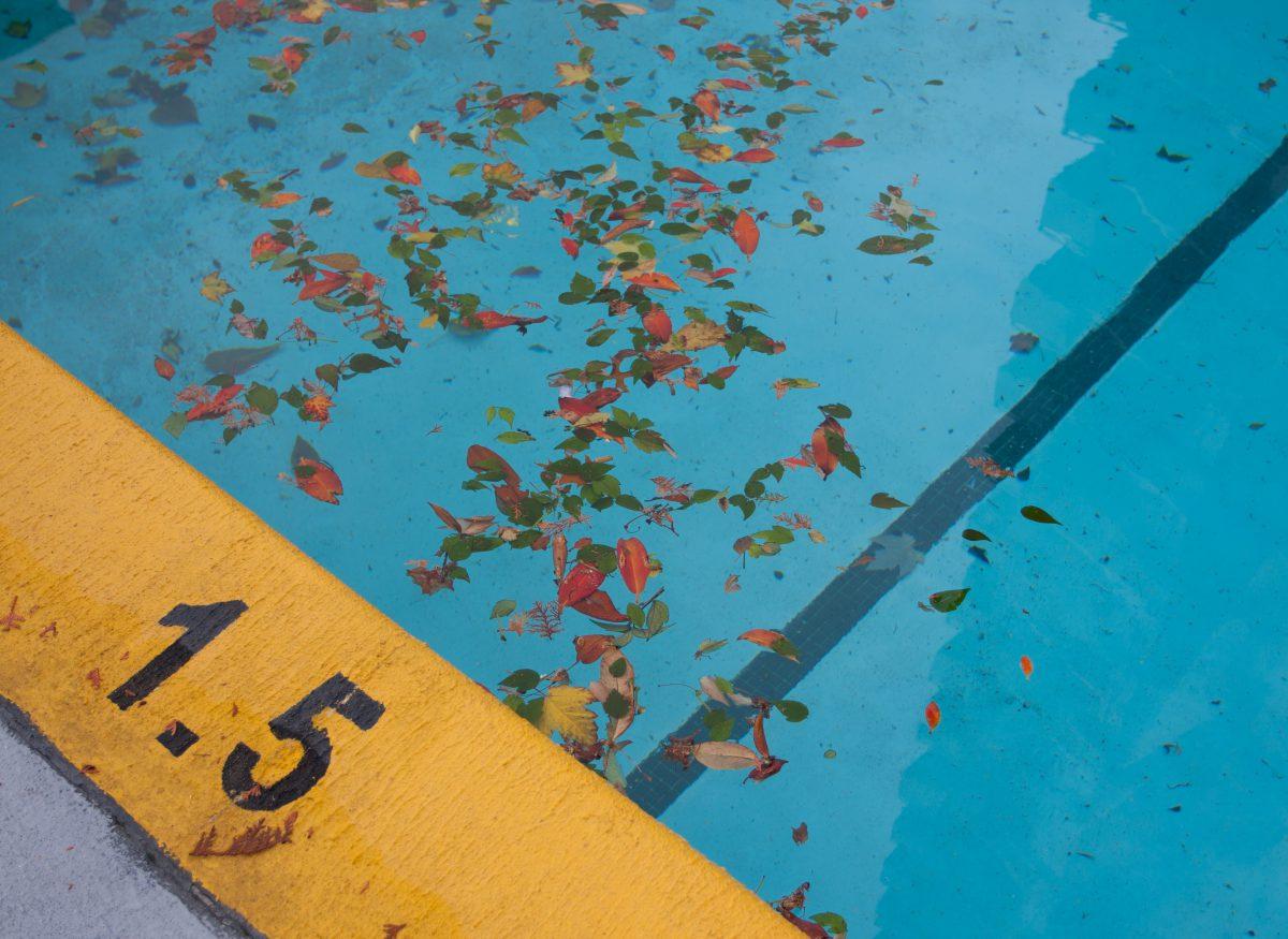 1.5 meters, autumn, pool, leaf