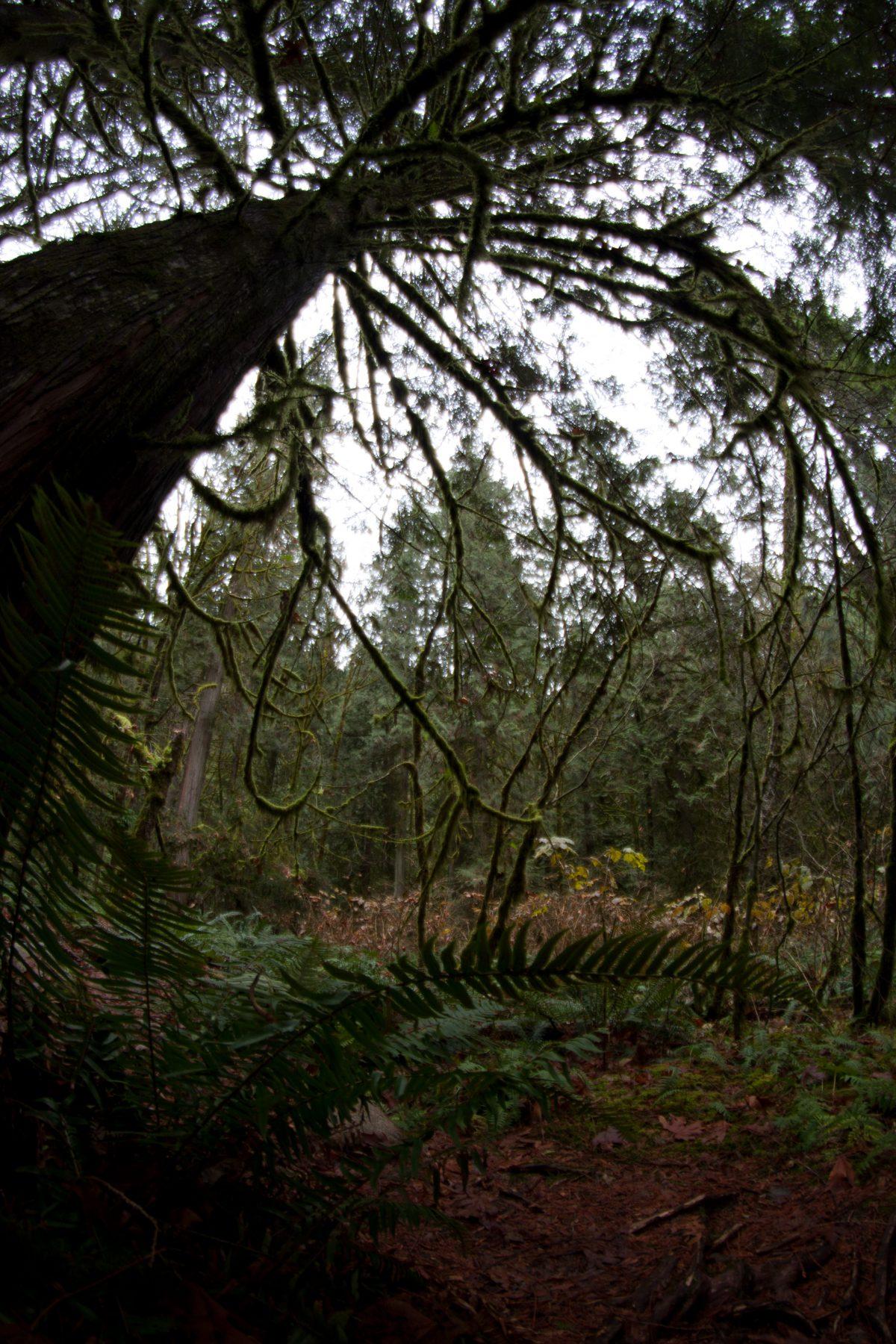 forest, tree, fisheye