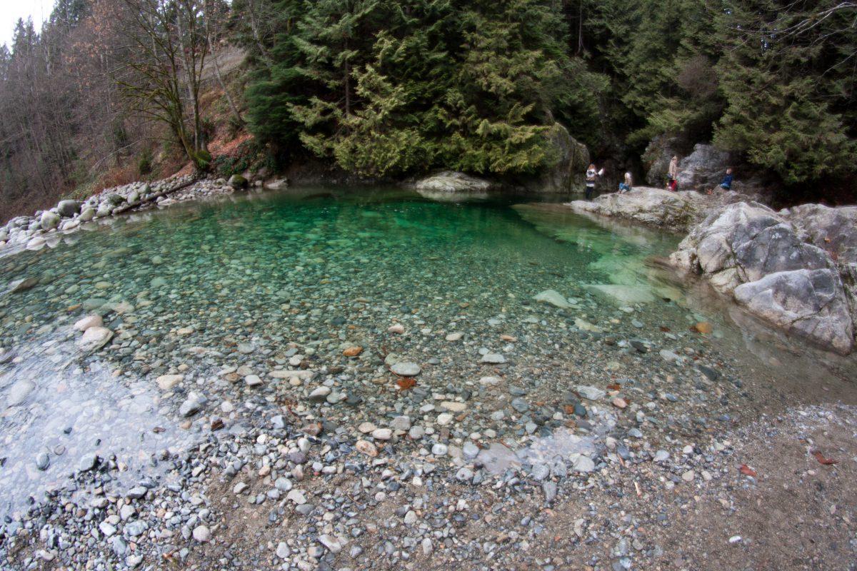 forest, river, water, fisheye