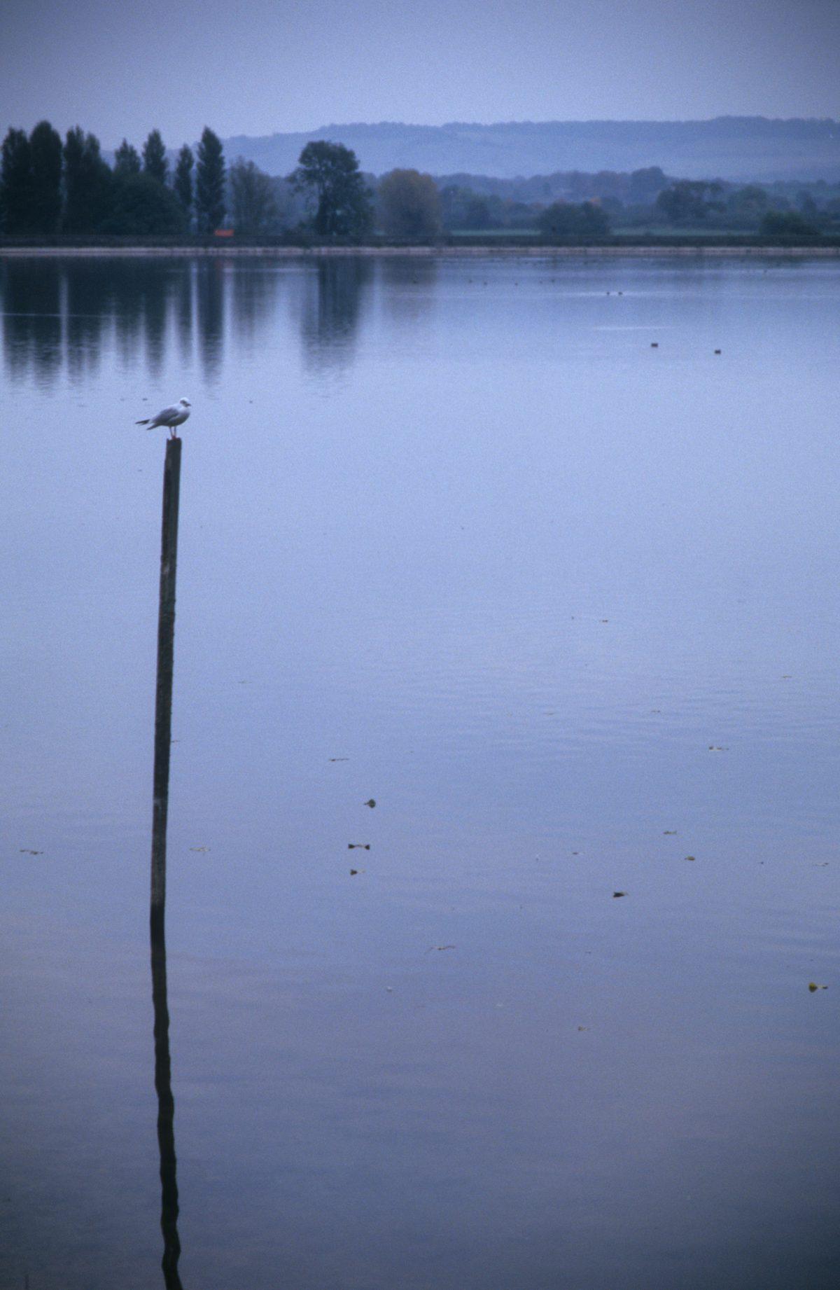Birdwatching, bird, water
