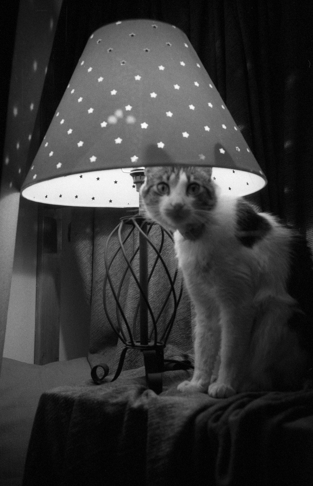 animal, light, bw