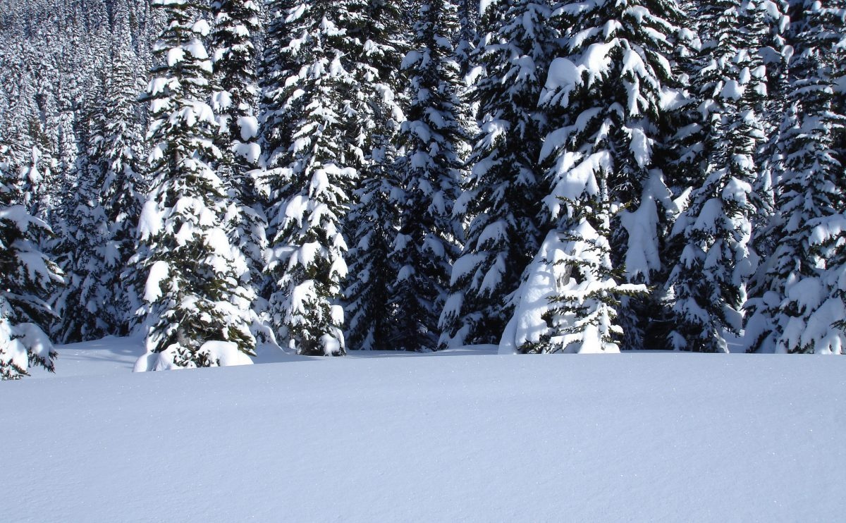 snow, mountain, forest