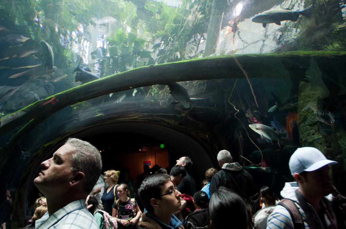 Aquarium - At California Academy of Science, aquarium, fish