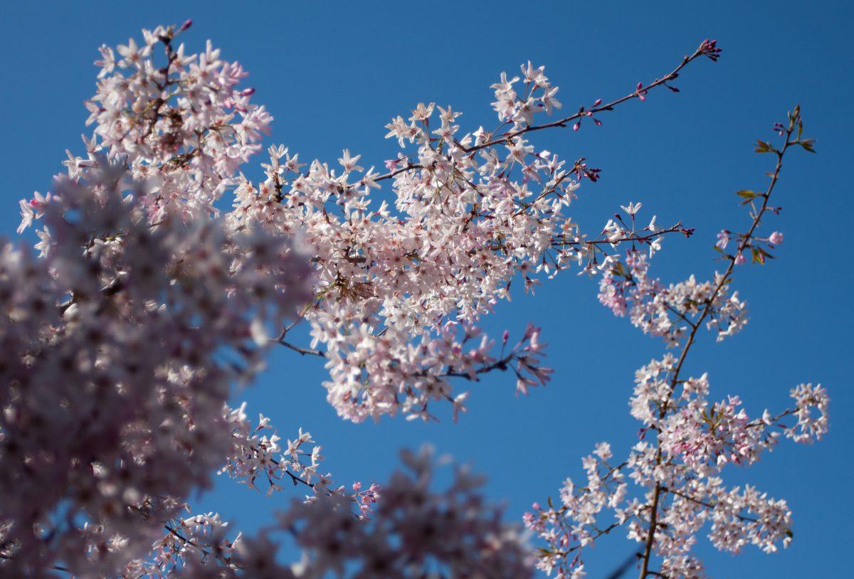 Spring, plant