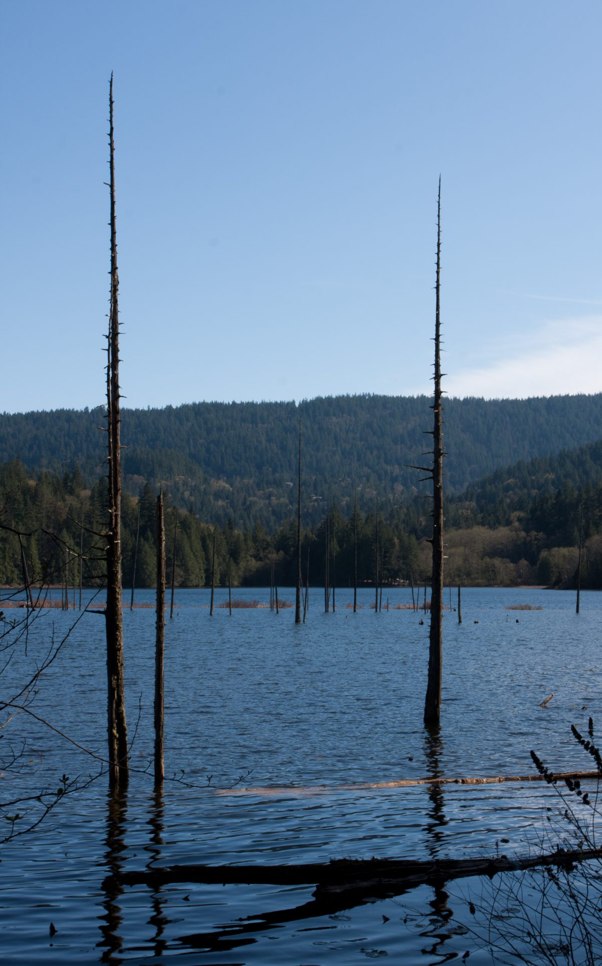 lake, forest, dead