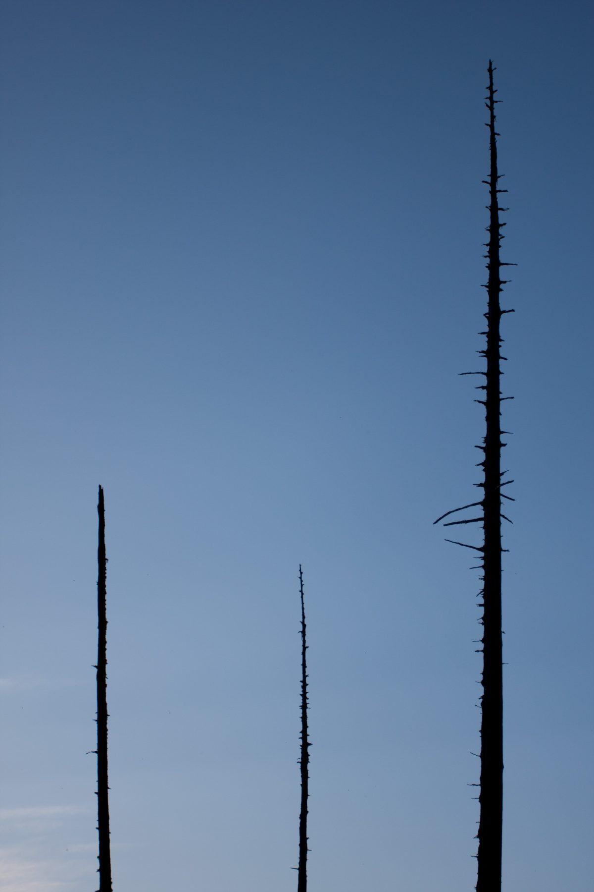 dead, sky, tree