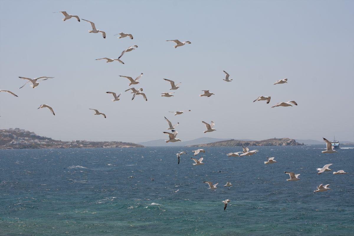 sea, bird