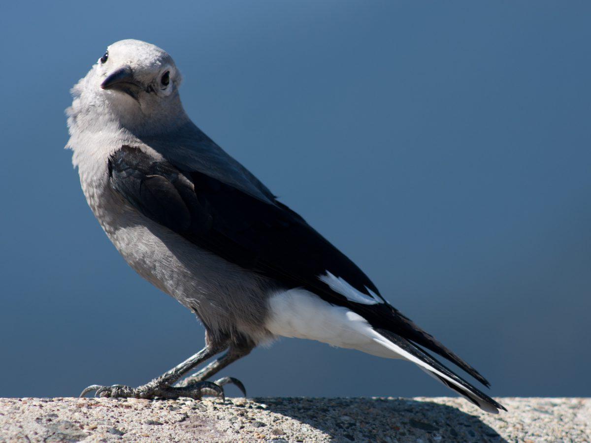bird, portrait