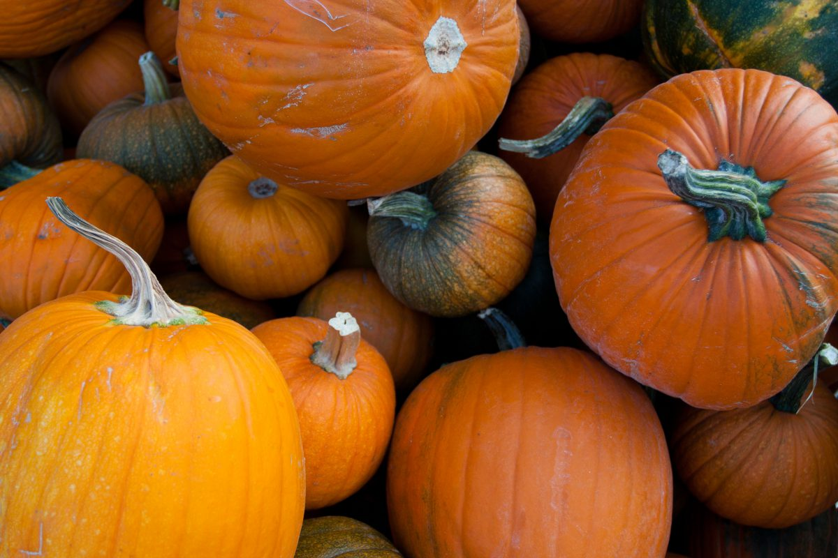 Pumkins, vegetable, pattern, many, color