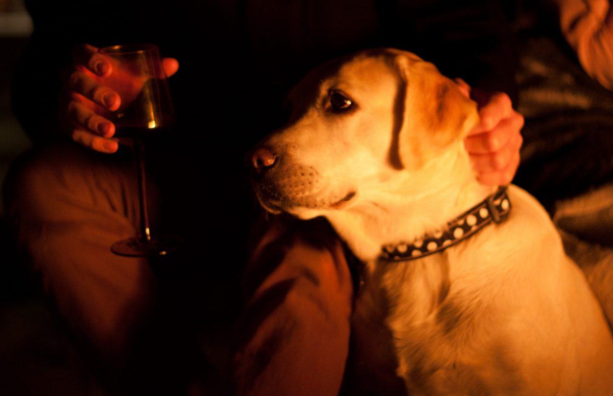 Daisy, drink, portrait