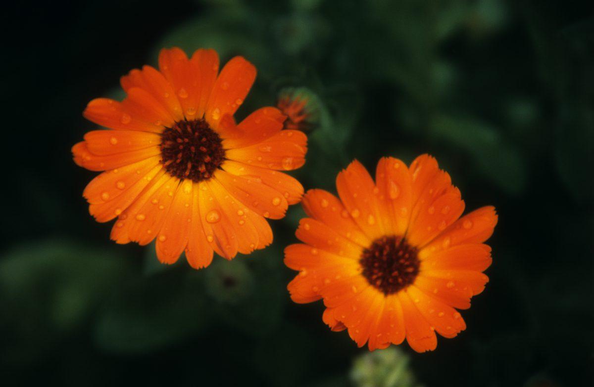 plant, color