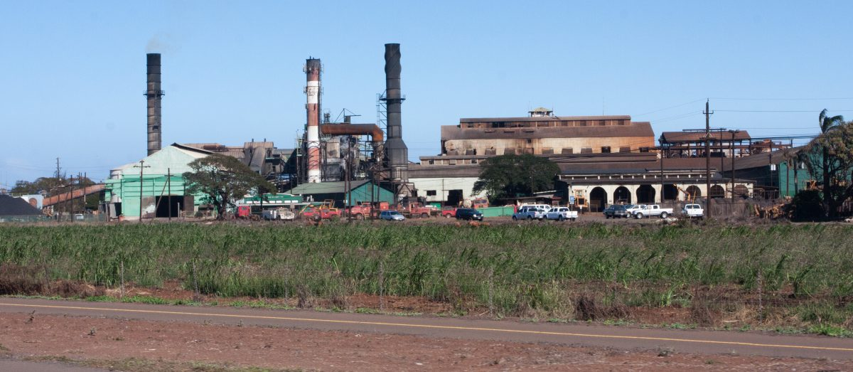 Sugar Cane Factory, road