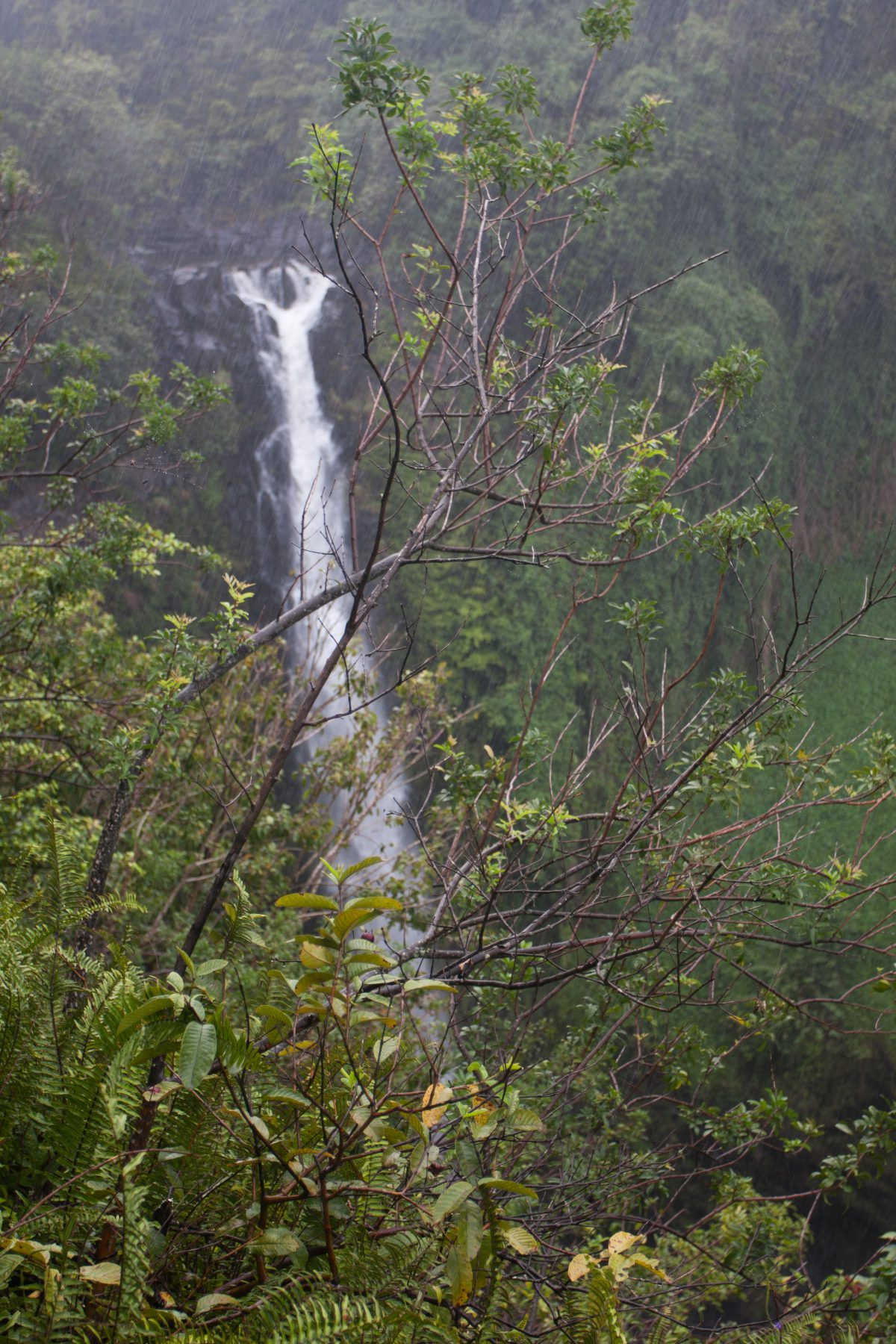 Kipahulu, forest, tree, waterfall