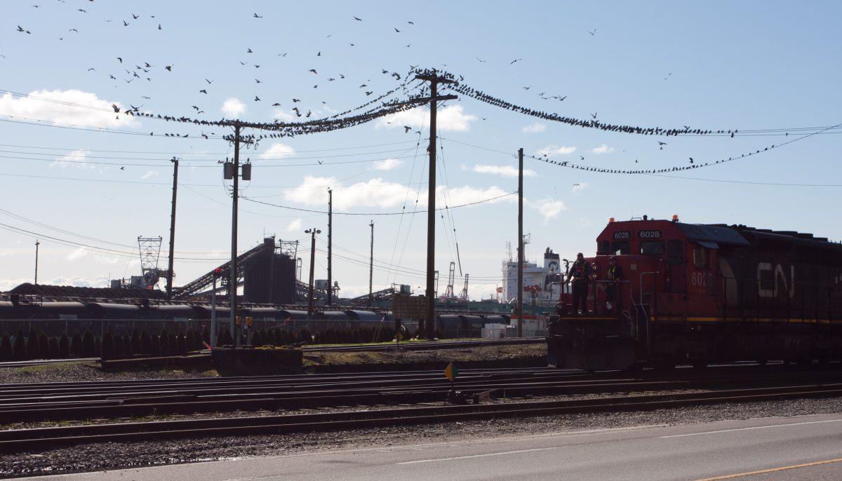 train, bird