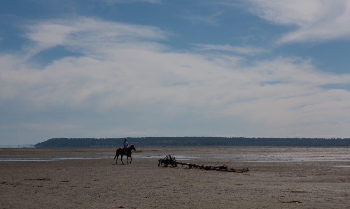 horse, animal, beach