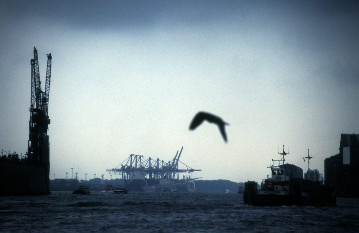 port, sky, sea, bird, crane