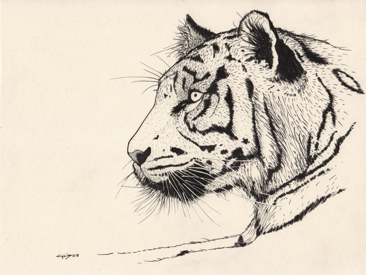 Tiger - 28x22cm, pen on paper, paper, ink, pen, ch3
