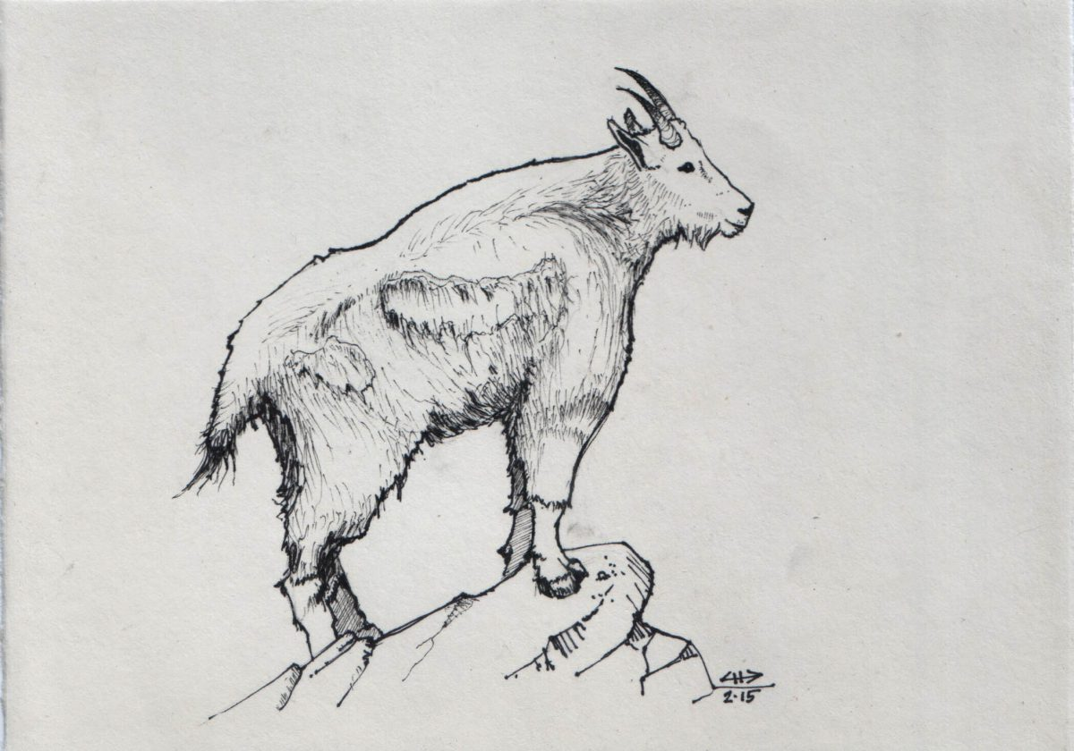 Goat - 18x12cm, markers on paper, ink, paper, ch3, pen