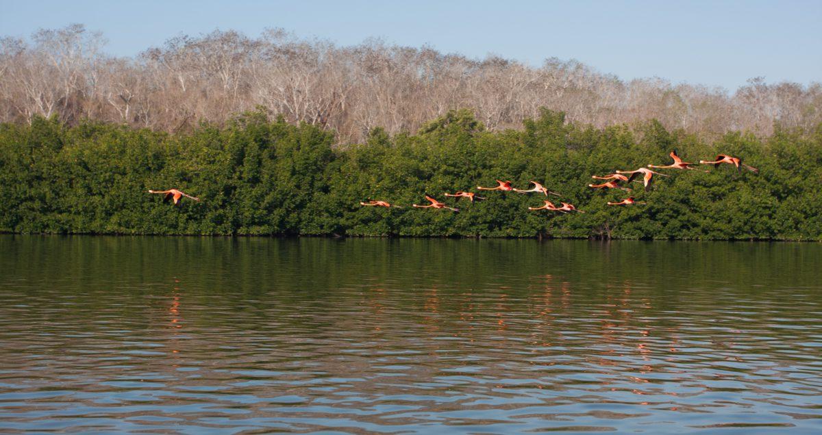 lake, bird, reflection, forest