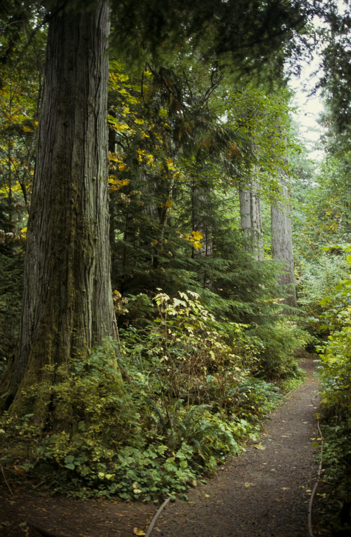 Heading to Tofino, forest
