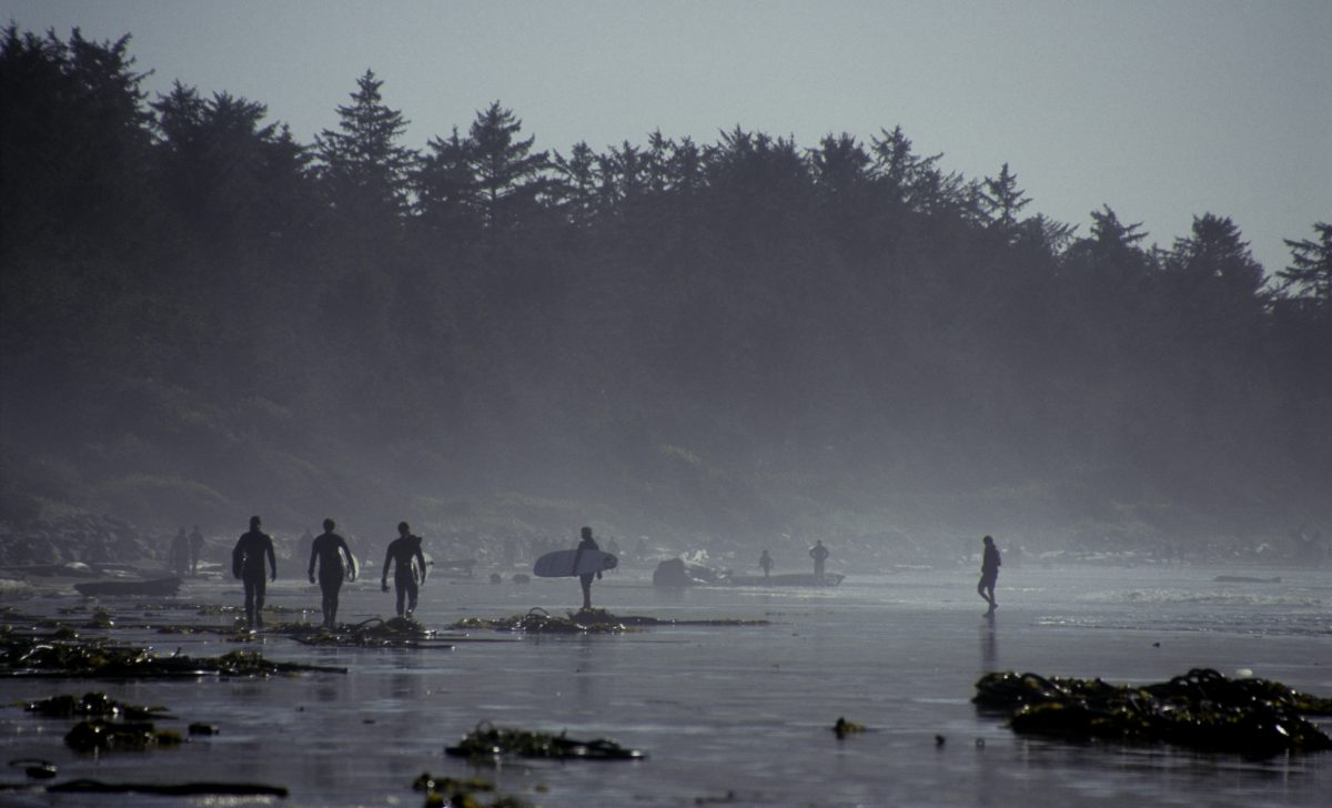 surfing - at Tofino, forest, beach, sea