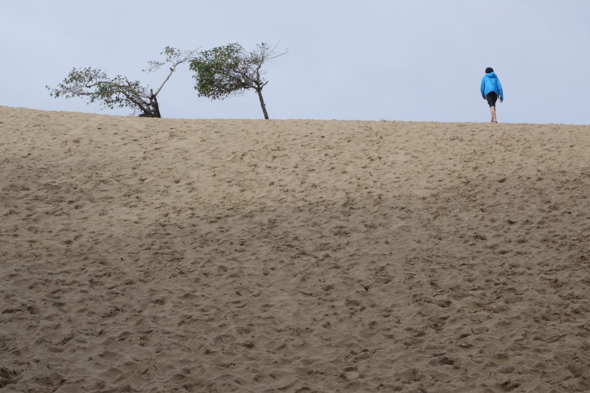 Cycling tour - Vancouver to LA - Sand dunes, sand, male, tree