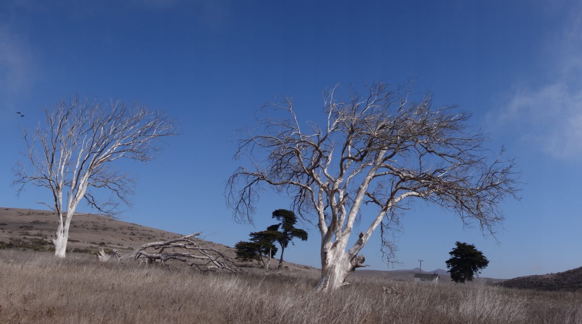 Cycling tour - Vancouver to LA - Remoteness, tree, sky